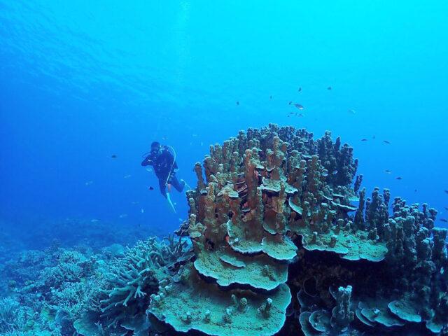 水納島のサンゴ礁