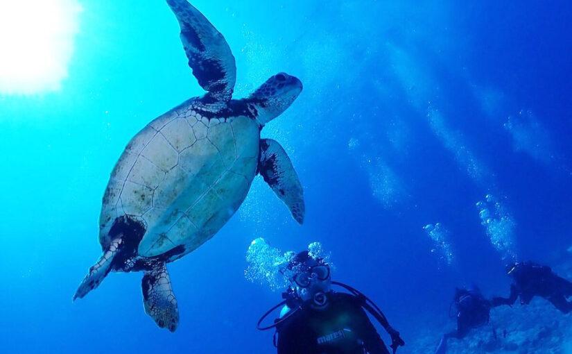 水納島ファンダイビングでウミガメと泳ぐ