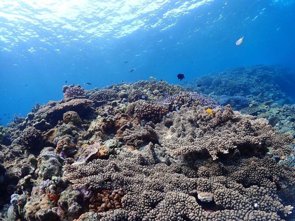 水納島,体験ダイビング,綺麗な海,透明度抜群,シュノーケリング,ツアー