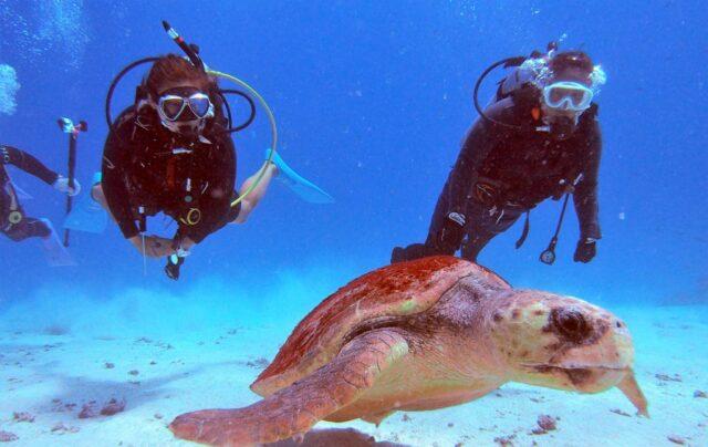 ダイビングwithウミガメ